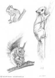 grey squirrel donna m strachan
