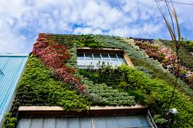 native plants san francisco san francisco u0027s first community built living wall is a drought