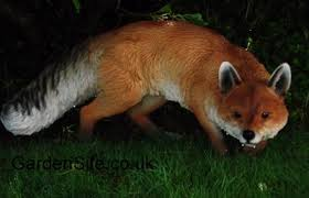 how to deter foxes in your garden gardensite co uk