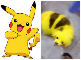 How To Look Happy by A Pokemon Fan Dyed Their Dog To Look Like A Pikachu And The