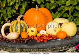 ornamental squash stock photos ornamental squash stock images