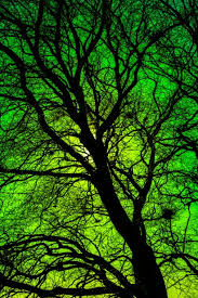 green tree silhouette free stock photo domain pictures