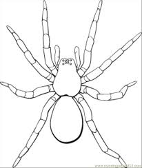 Spider Color Pages Spider Coloring Pages Printable Many Interesting Cliparts by Spider Color Pages