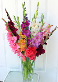 plants that don t need sunlight to grow gladiola colorful easy to grow summer blooms sowing the seeds