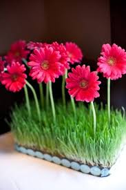 Daisy Centerpiece Ideas by 207 Best Gerbera Daisies Images On Pinterest Flowers Gerbera