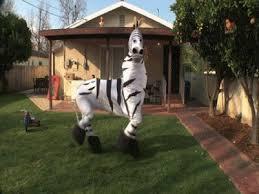 Halloween Costumes Zebra Funniest Group Halloween Costumes