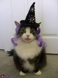 Halloween Costume Cat Halloween Birthday Boy Toby Costume Ideas Cats