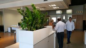 plants for office cabinet planters