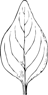 leaf clipart black and white png clipartxtras