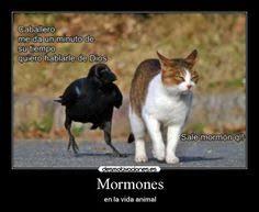 Memes De Google - resultado de imagen para memes sud en español jctrigo humor mormón
