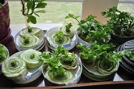 indoor winter gardening to extend growing and harvest season
