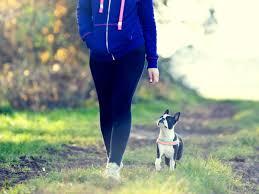 australian shepherd training tips 12 very helpful dog training tips for everyone american kennel club