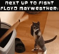 Cat Fight Meme - great cats be funny blog may 2015