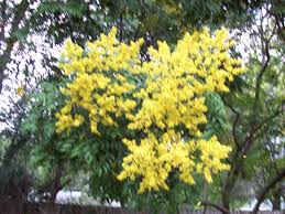 forest rain tree backyard blooms yellow forest landscape desktop