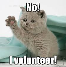 I Volunteer Meme - volunteer cat memes quickmeme