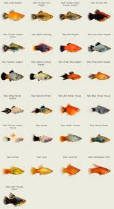 types of aquarium fish with names