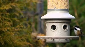 backyard bird watching black capped chickadee chickadee dee