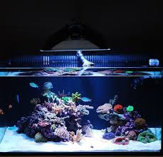 Floating Aquascape Reef2reef Saltwater And Reef Aquarium Forum - minimalist aquascaping page 4 reef central online community