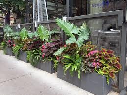 summer annuals planter container railing urban garden
