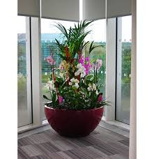 plants for office office plants office plant hire ambius uk