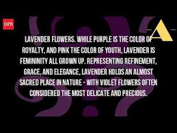 Flowers Colors Meanings - what does the lavender flower mean youtube