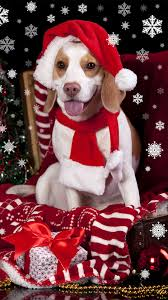 dog christmas wallpaper iphone animals wallpaper
