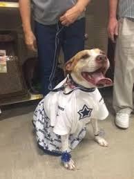 Dallas Cowboy Costumes Halloween 25 Mest Populære Idéer Om Dallas Cowboys Cheerleader Costume