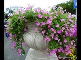 my nice garden petunia flowers and landscaping ideas youtube
