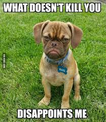 Frowning Dog Meme - 17 best grumpy puppy images on pinterest grumpy dog cubs and doggies