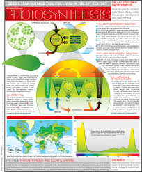 photosynthesis infographics pinterest photosynthesis