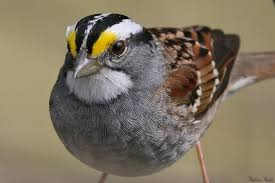 Cool Sparrow - i saw a white sparrow in our yard for the since