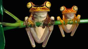 72 tree frog hd wallpapers background images wallpaper abyss