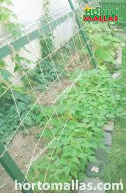 advantages of vertical trellis in growing vegetables