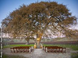 paso robles wedding venues cass winery and vineyard paso robles central coast wine country