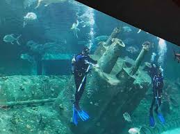 North Carolina snorkeling images Indoor oceans north carolina aquarium at pine knoll shores jpg