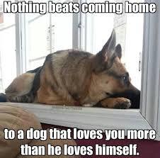Aww Yea Meme - aww yea dogs r the best 3 my love of animals pinterest dog