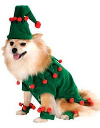 buy funny dog costumes and cute puppy costumes at guaranteed low