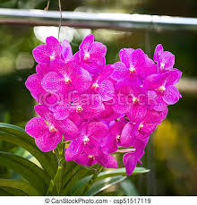 vanda orchid vanda orchid flowers bouquet of purple orchids vanda stock