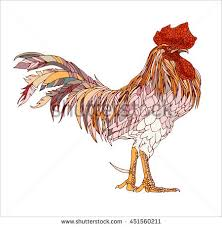 rooster chicken vector illustration can stock vector