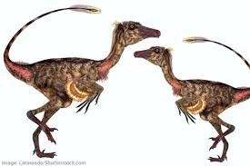 troodon facts kids u0026 students dinosaur information u0026 pictures