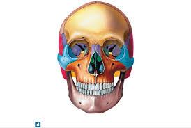 Human Anatomy Flashcards Print Human Anatomy Chapter 6 Flashcards Easy Notecards
