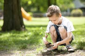 themes in the education of little tree tree planting month urban act academy place based learning in