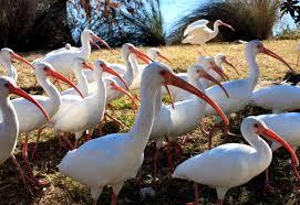 Florida Backyard Birds - 100 central florida backyard birds yellow birds birds by