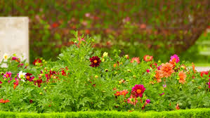flowers in the garden of palais royal in paris france stock