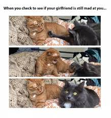 Angry Girlfriend Meme - when you check to see if your girlfriend is still mad at you