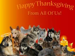 happy thanksgiving from our pack to yours member media husky