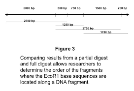 dna mapping restriction mapping methods and technology for genetic analysis