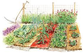 mulch vegetable garden gardensdecor com