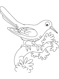 resting cuckoo bird coloring download free resting cuckoo