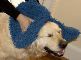 Soggy Doggy Doormat Canada 302 Best Want For My Pets Images On Pinterest Animal Rescue